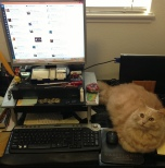 JJA's work station (+adorable cat)