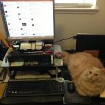 JJA's work station (+adorable cat)